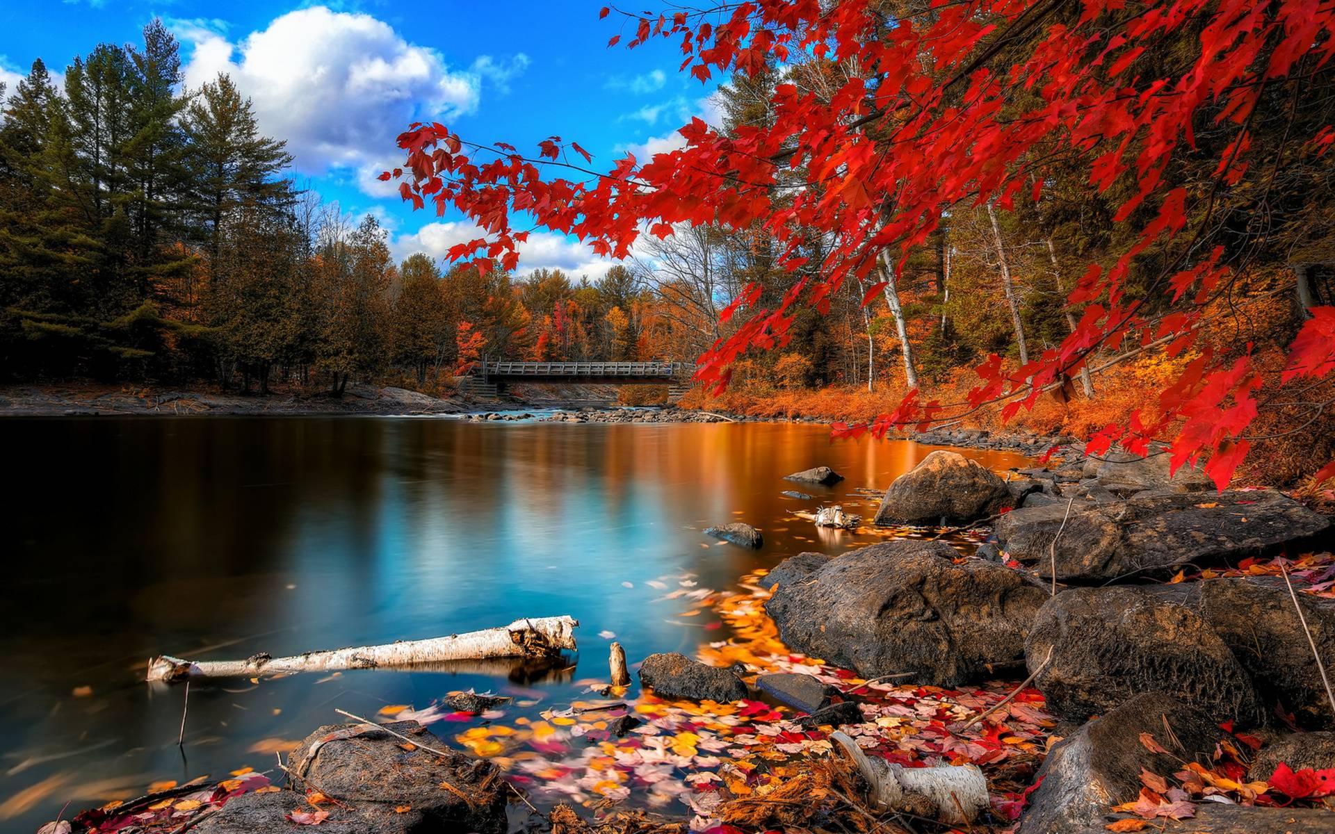 Finishing Before Fall Seasonal Olathe Landscaping Ideas Huston