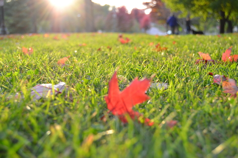 Fall Landscaping Tips for Olathe Lawns and Landscapes