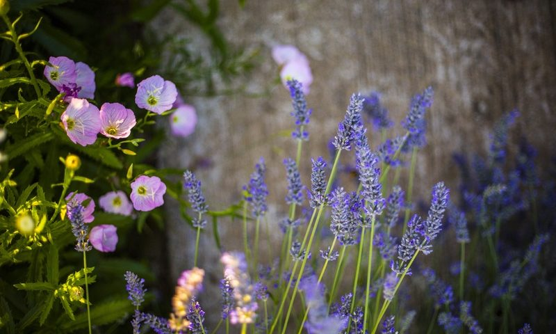 choosing the right annuals and perennials for your olathe garden