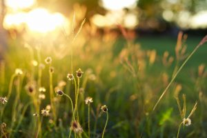 Common Summer Landscaping Challenges and How to Tackle Them